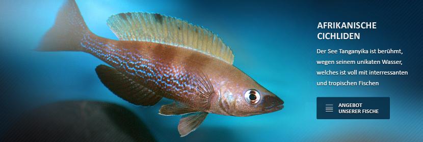 Der See Tanganyika ist berühmt, wegen seinem unikaten Wasser, welches ist voll mit interressanten und tropischen Fischen