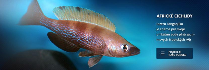 Jazero Tanganjika je známe pre svoje unikátne vody plné zaujímavých tropických rýb