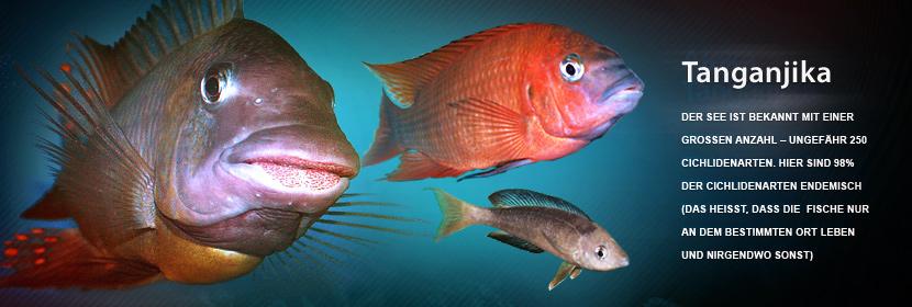 Der See ist bekannt mit einer grossen Anzahl – ungefähr 250 Cichlidenarten. Hier sind 98% der Cichlidenarten endemisch  (das heisst, dass die  Fische nur an dem bestimmten Ort leben und nirgendwo sonst).
