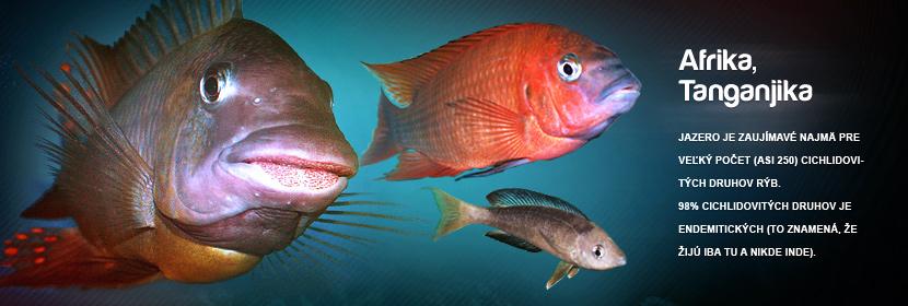 Jazero je zaujímave najmä pre veľký počet (asi 250) cichlidovitých druhov rýb. 99% cichlidovitých druhov je endemitických (to znamená, že žijú iba tu a nikde inde).