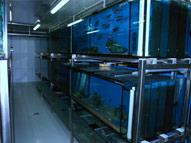 Chov rýb v akváriách