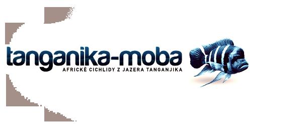 TANGANIKA-MOBA, africké cichlidy z jazera Tanganjika v Afrike